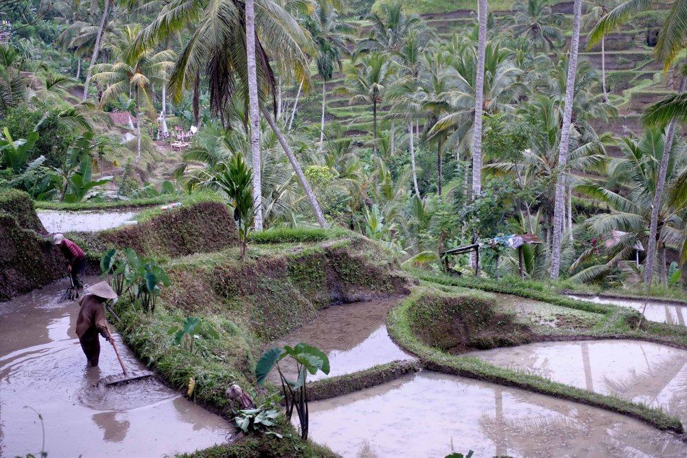 Bali_026