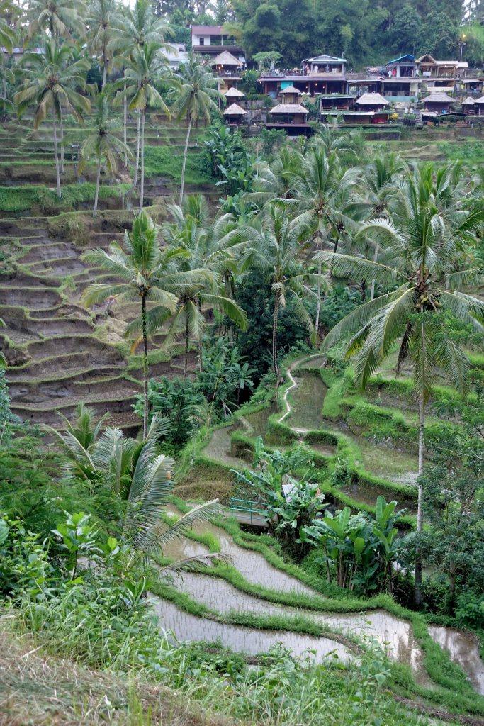Bali_028