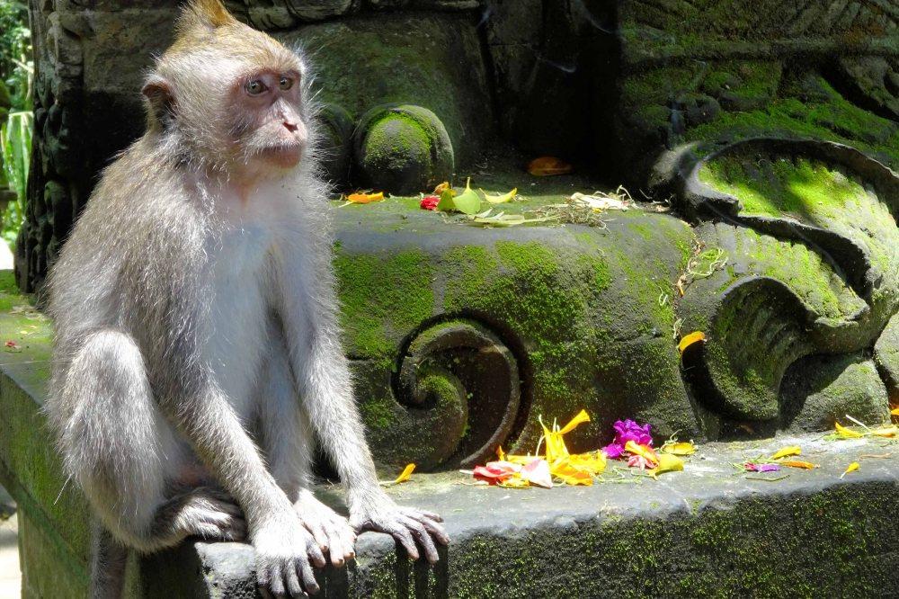 Bali_291