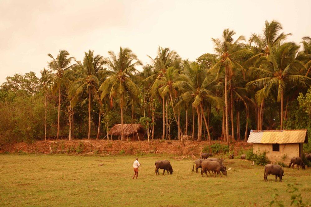 Goa_071