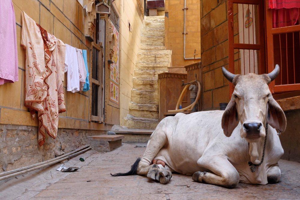 Jaisalmer_008