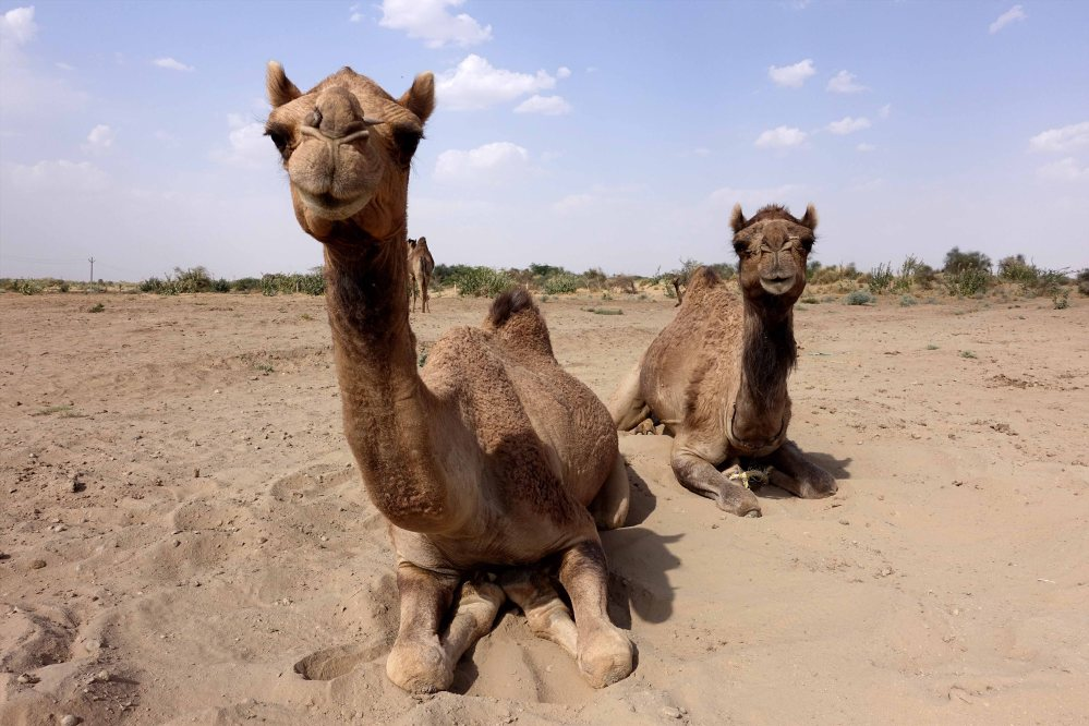 Thar-Desert-Safari_001