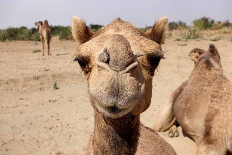 Thar-Desert-Safari_002